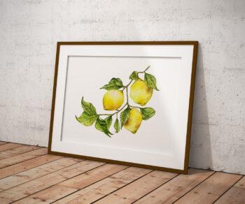 Elżbieta Wituła - cytryny